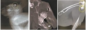 Российские ученые воссоздали натуральную кость