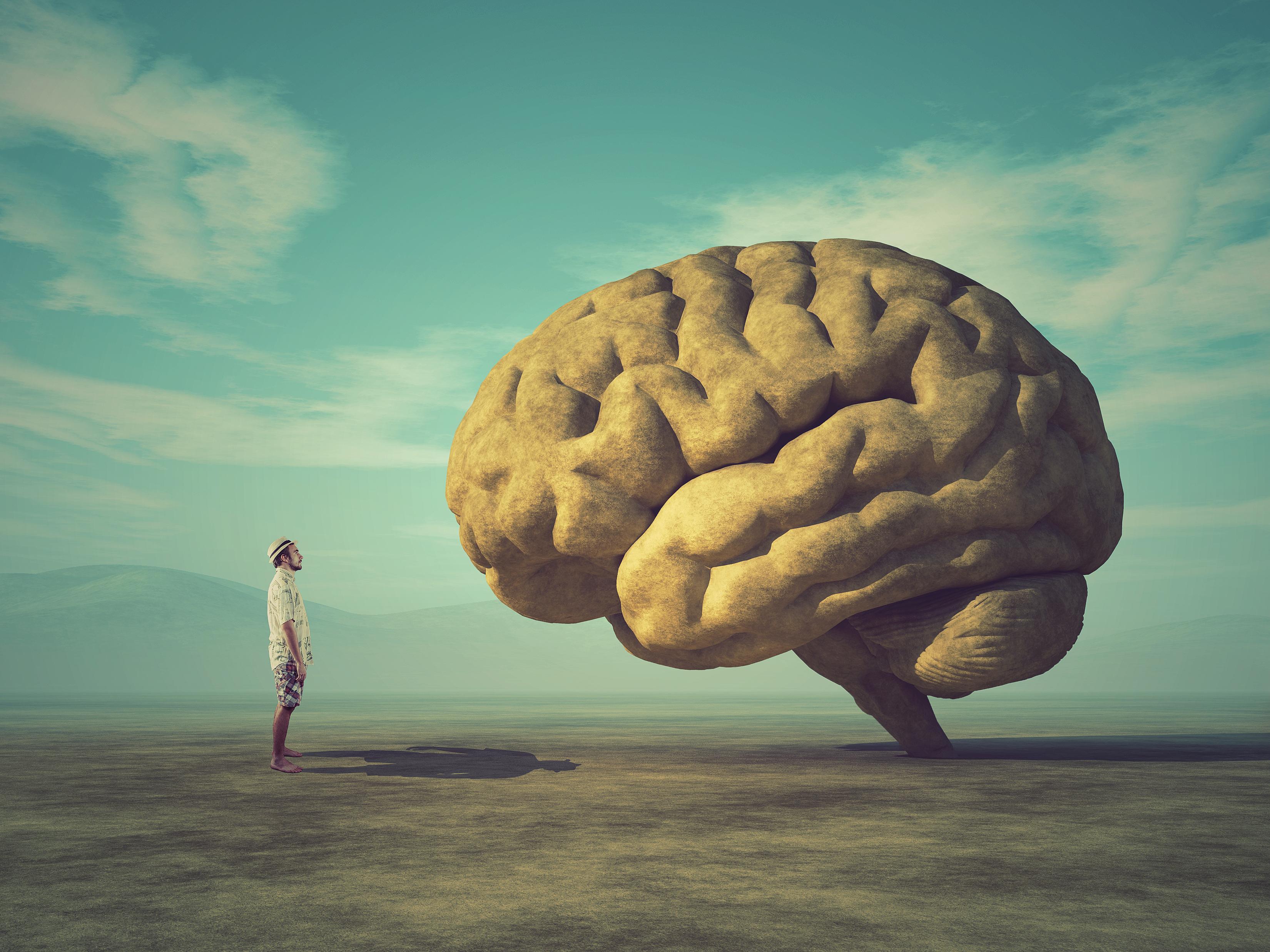 Картинки ваши мозги