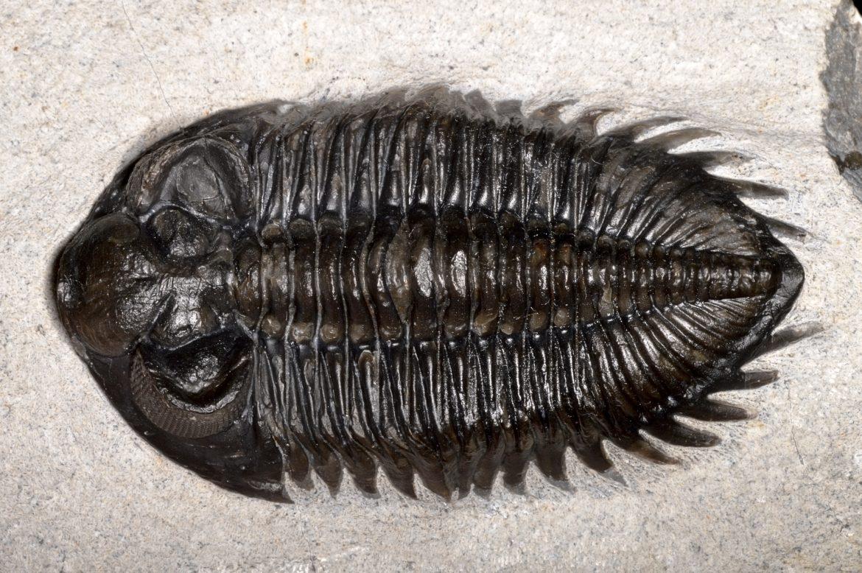 Маленький монстр. Чьи останки нашли на острове Кенгуру