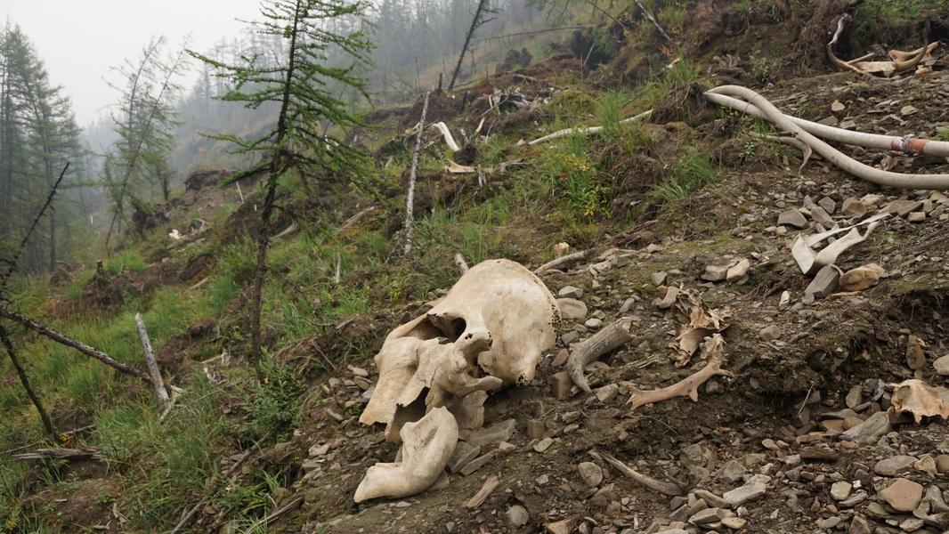 беслане искатели мамонтов в якутии фото настолько красива, что